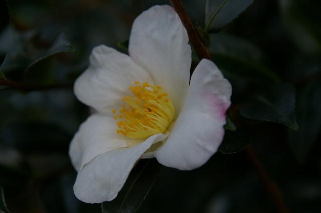 大野路に咲く花