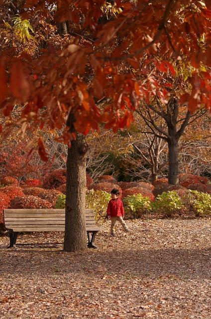 秋に溶けて