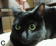 C黒猫ちゃん