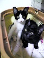 保護猫2匹