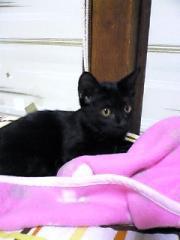 10月21日の黒猫