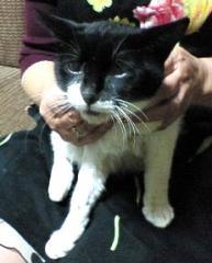 呉市の白黒猫