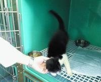 呉市の白黒猫(背中の色)