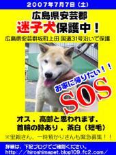 迷子犬SOS!!!