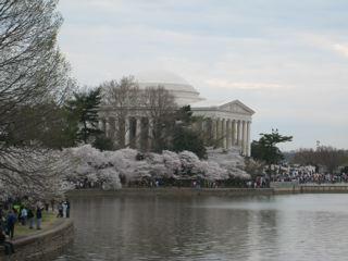 ジェファソン記念館と桜並木