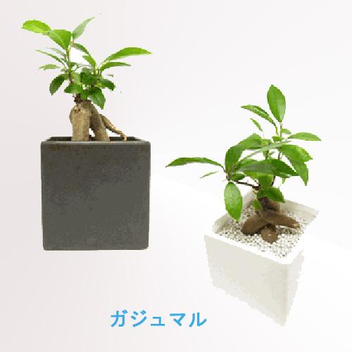 garden_1941_30550061.jpg