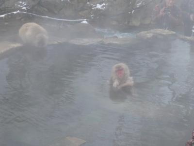 地獄谷野猿公苑8