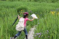 駒止湿原 2011 7 3 04