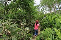駒止湿原 2011 7 3 14