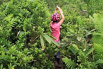 駒止湿原 2011 7 3 17