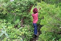 駒止湿原 2011 7 3 16