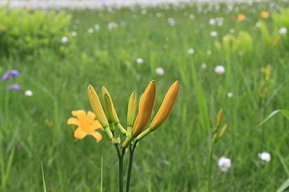 駒止湿原 2011 7 3 009