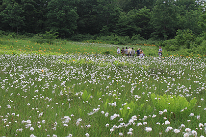 駒止湿原 2011 7 3 010