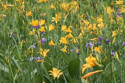 駒止湿原 2011 7 3 006