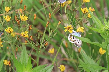 駒止湿原 2011 7 3 013