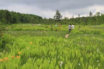 駒止湿原 2011 7 3 014