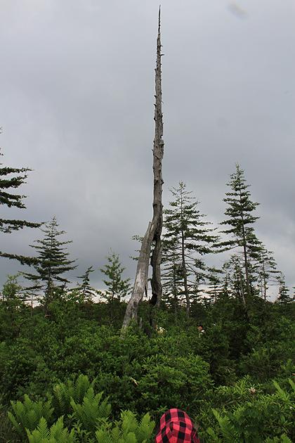 駒止湿原 2011 7 3 015