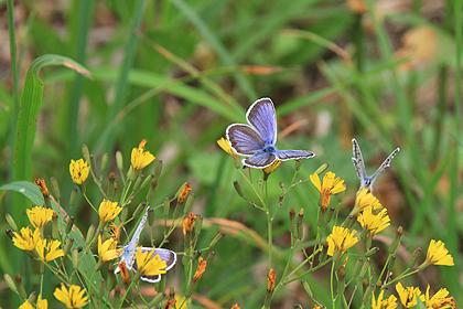 駒止湿原 2011 7 3 012