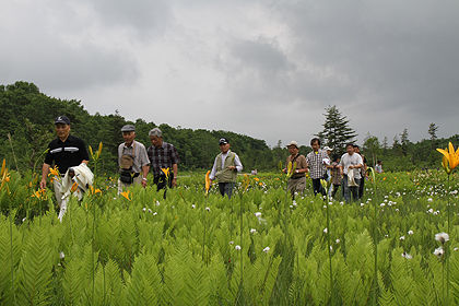 駒止湿原 2011 7 3 020