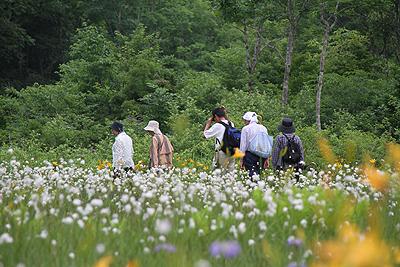 駒止湿原 2011 7 4 011