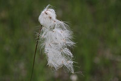 駒止湿原 2011 7 4 008