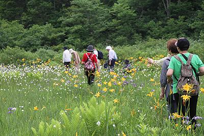 駒止湿原 2011 7 4 010