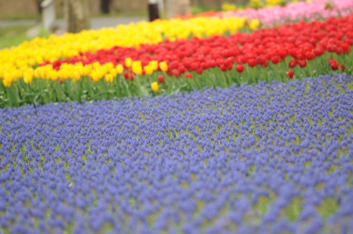 4864お花のじゅうたん。。