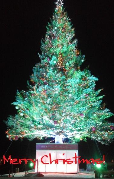 11-12-19-1_20111224015926.jpg