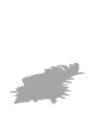 写真-貝の影-合成用