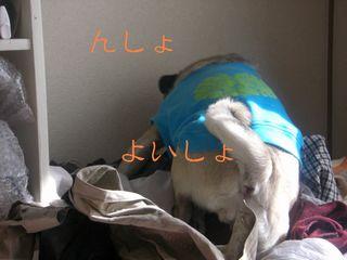洗濯日和ー1