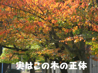 乾燥の秋ー7
