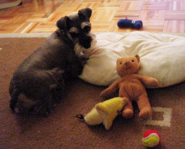 おもちゃに囲まれるプルーニャ①