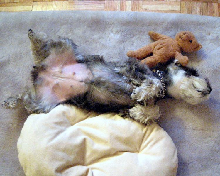 ひっくり返って寝るプルーニャ