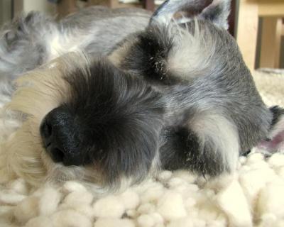 眠りそうなプルーニャ④