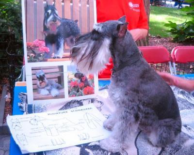 Responsible Dog ownership Day⑧