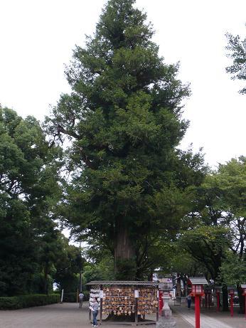 鷲宮神社8