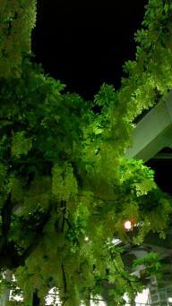 見栄橋の花