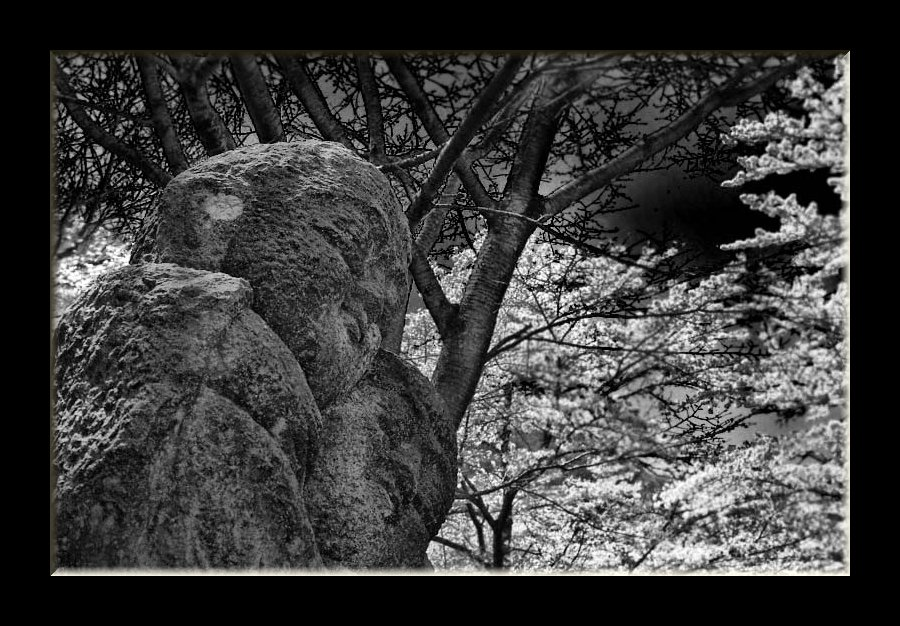道祖神と桜