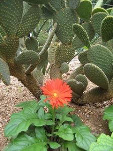 お花とサボテン