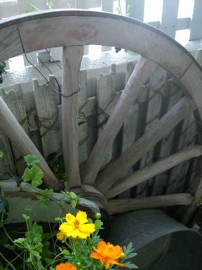 大車輪・・古くから我が家に。