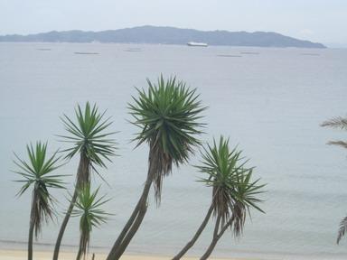 砂浜もきれい・・・