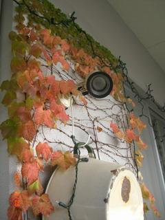 紅葉。。そして落ちる。。