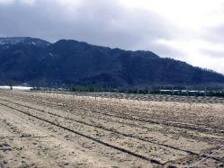 「フェルミエ」のブドウ畑