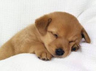 おやすみワンコ