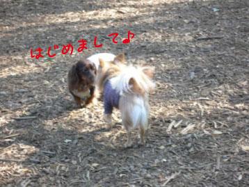 yoyogikoen2