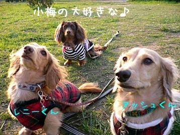2007.11.4 (15)のコピー
