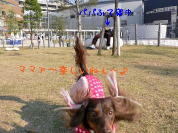 2007.11.15豊洲 (47)のコピー