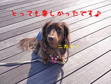 2007.11.24横浜大桟橋 (27)のコピー