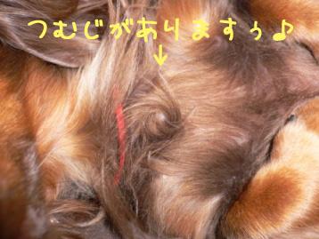 2007.11.24横浜大桟橋 (61)のコピー