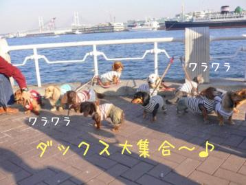 2007.11.24横浜大桟橋 (94)のコピー